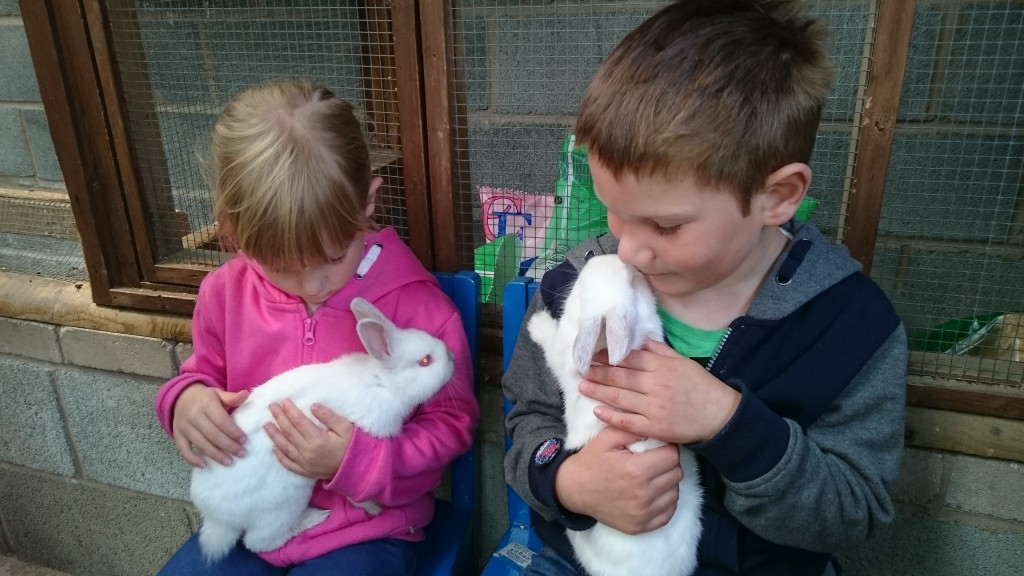 Llanfair Animal Farm Park